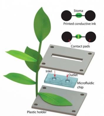 Sensori sulle foglie: quando la pianta necessita di acqua?